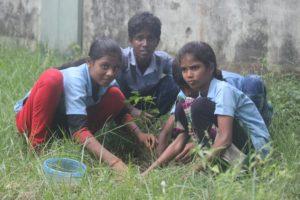 baum pflanzen2